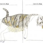 """""""Ciciolina the cat"""" double page spread. Colour pencil drawing of a cat lying on its side."""