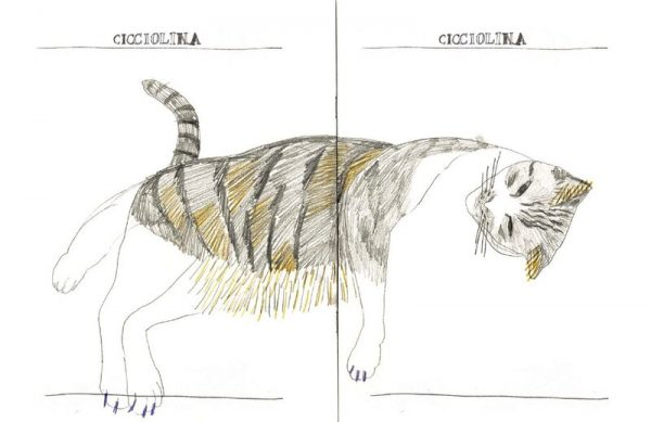 """""""Ciciolina the cat"""" zine - double page spread. Colour pencil drawing of a cat lying on its side."""